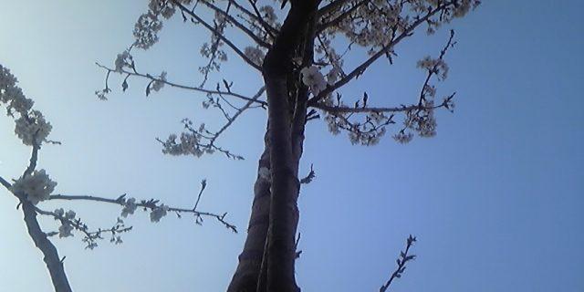 CUBE桜(倉本)